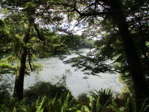 Der Anduin durch die Bäume